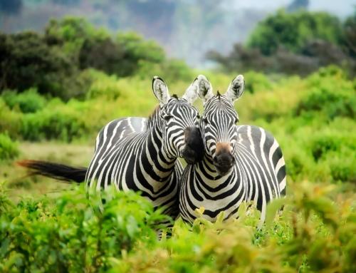 Erlebnis Kenia | Glashütte September 2020